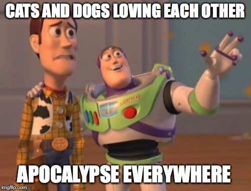 X, X Everywhere Meme | CATS AND DOGS LOVING EACH OTHER APOCALYPSE EVERYWHERE | image tagged in memes,x,x everywhere,x x everywhere | made w/ Imgflip meme maker
