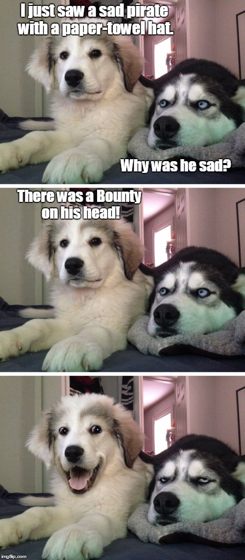 Avast, Ye Scurvy Dogs! | I just saw a sad pirate with a paper-towel hat. There was a Bounty on his head! Why was he sad? | image tagged in bad pun dogs,memes,pirate,paper towel | made w/ Imgflip meme maker