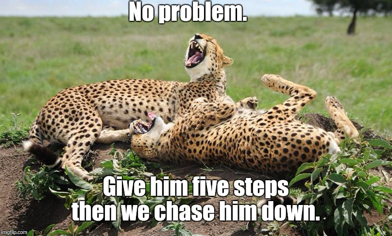 Cheetahs | No problem. Give him five steps then we chase him down. | image tagged in cheetahs | made w/ Imgflip meme maker
