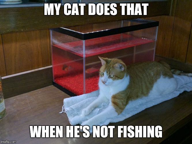 MY CAT DOES THAT WHEN HE'S NOT FISHING | made w/ Imgflip meme maker