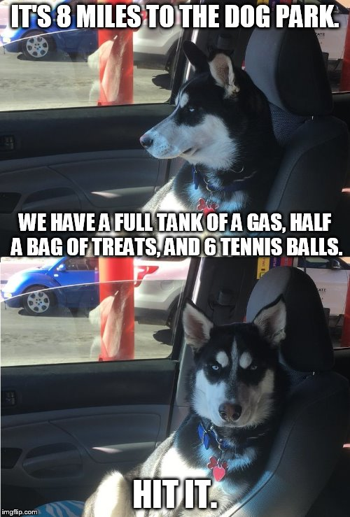 Husky Co-Pilot | IT'S 8 MILES TO THE DOG PARK. HIT IT. WE HAVE A FULL TANK OF A GAS, HALF A BAG OF TREATS, AND 6 TENNIS BALLS. | image tagged in husky co-pilot | made w/ Imgflip meme maker