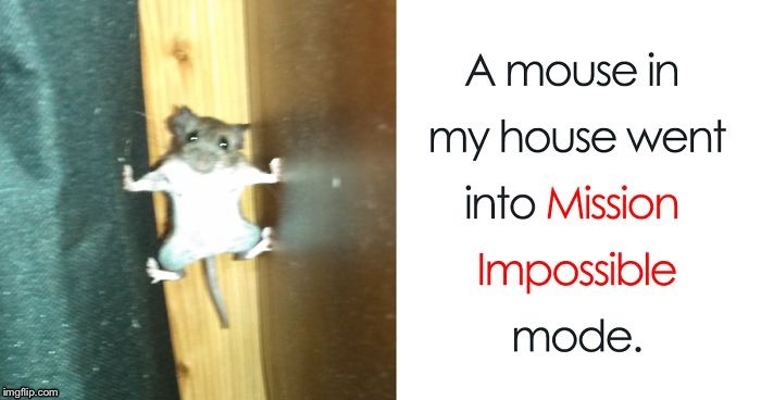 image tagged in mission impossible mouse | made w/ Imgflip meme maker