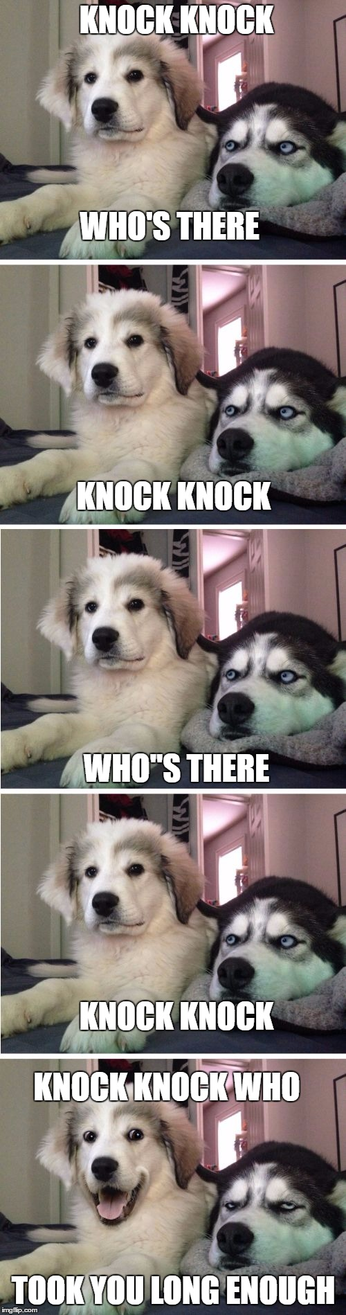 "Knock Knock Dogs | WHO'S THERE KNOCK KNOCK KNOCK KNOCK WHO""S THERE KNOCK KNOCK KNOCK KNOCK WHO TOOK YOU LONG ENOUGH 