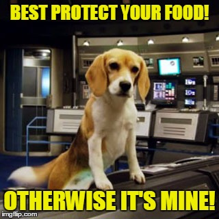 Captain Archer's Beagle Porthos | BEST PROTECT YOUR FOOD! OTHERWISE IT'S MINE! | image tagged in captain archer's beagle porthos | made w/ Imgflip meme maker