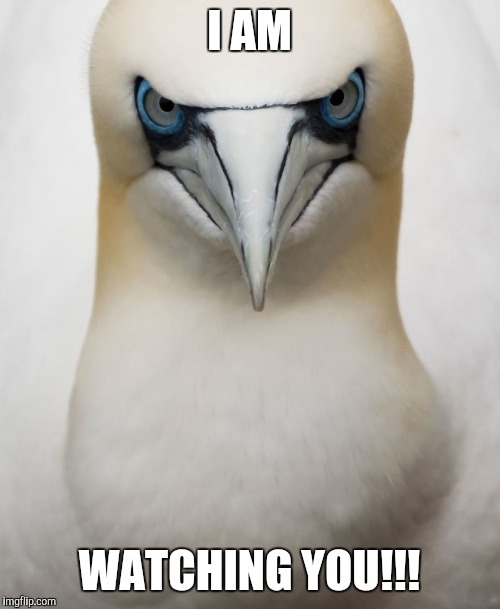 Watching you | I AM WATCHING YOU!!! | image tagged in bird | made w/ Imgflip meme maker