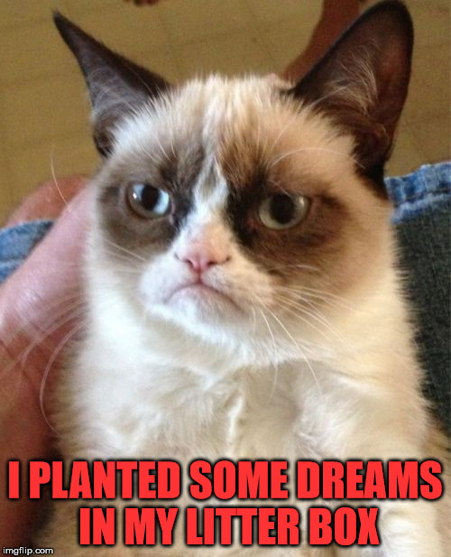 Grumpy Cat Meme | I PLANTED SOME DREAMS IN MY LITTER BOX | image tagged in memes,grumpy cat | made w/ Imgflip meme maker