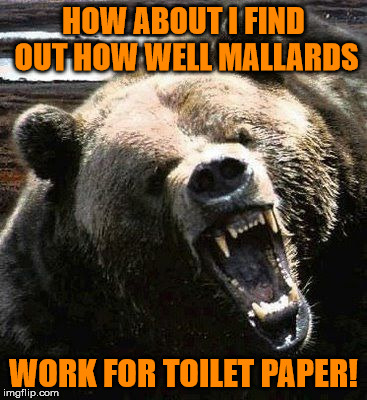 HOW ABOUT I FIND OUT HOW WELL MALLARDS WORK FOR TOILET PAPER! | made w/ Imgflip meme maker