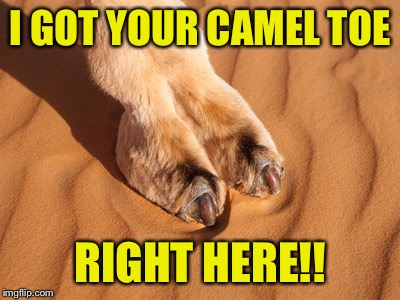 I GOT YOUR CAMEL TOE RIGHT HERE!! | made w/ Imgflip meme maker