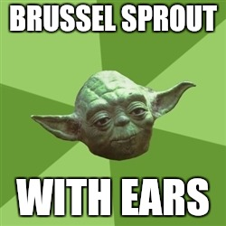 Advice Yoda Meme | BRUSSEL SPROUT WITH EARS | image tagged in memes,advice yoda | made w/ Imgflip meme maker