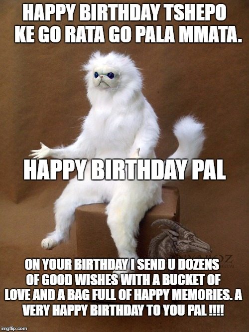 Persian Cat Room Guardian Single Meme | HAPPY BIRTHDAY TSHEPO  KE GO RATA GO PALA MMATA. ON YOUR BIRTHDAY I SEND U DOZENS OF GOOD WISHES WITH A BUCKET OF LOVE AND A BAG FULL OF HAP | image tagged in memes,persian cat room guardian single | made w/ Imgflip meme maker