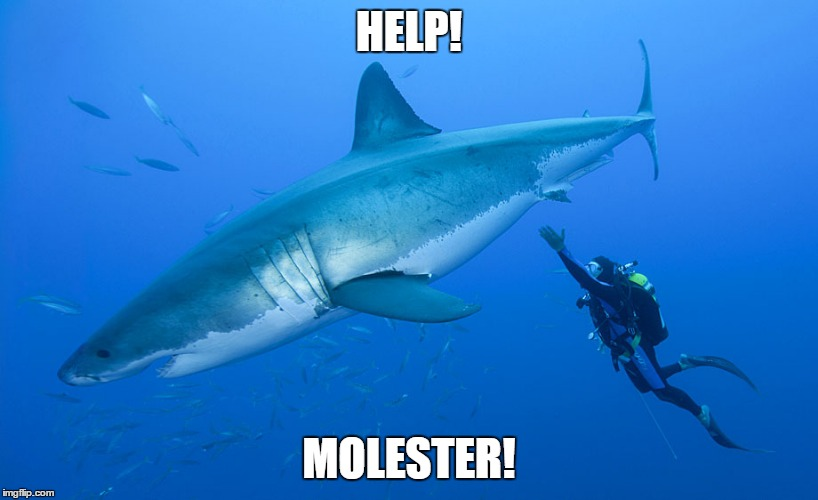 HELP! MOLESTER! | image tagged in great white shark,diver | made w/ Imgflip meme maker
