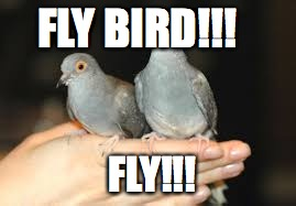 FLY BIRD!!! FLY!!! | made w/ Imgflip meme maker