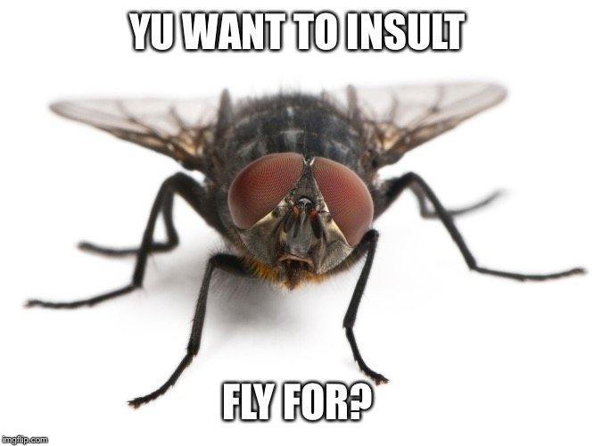 YU WANT TO INSULT FLY FOR? | made w/ Imgflip meme maker