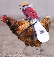 So many gifs of girls in yoga pants. Refresh yourself. Here's a monkey cowboy riding a chicken. | image tagged in memes | made w/ Imgflip meme maker