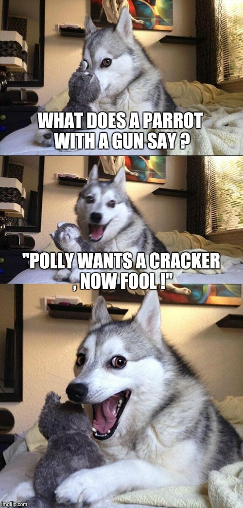 "Bad Pun Dog Meme | WHAT DOES A PARROT WITH A GUN SAY ? ""POLLY WANTS A CRACKER , NOW FOOL !"" 
