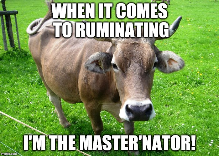 made this a few weeks ago as a response to a comment, thought it would be funny to submit | WHEN IT COMES TO RUMINATING I'M THE MASTER'NATOR! | image tagged in cow,puns | made w/ Imgflip meme maker
