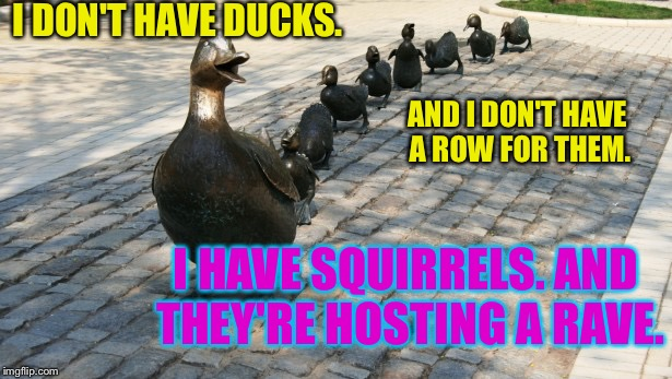 Ducks in a row Memes - Imgflip