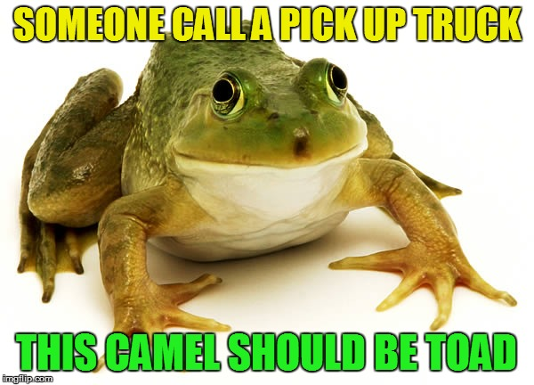 SOMEONE CALL A PICK UP TRUCK THIS CAMEL SHOULD BE TOAD | made w/ Imgflip meme maker