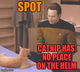 SPOT CATNIP HAS NO PLACE ON THE HELM | made w/ Imgflip meme maker