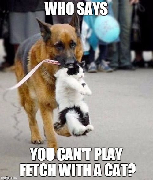 WHO SAYS YOU CAN'T PLAY FETCH WITH A CAT? | image tagged in dog fetching cat | made w/ Imgflip meme maker