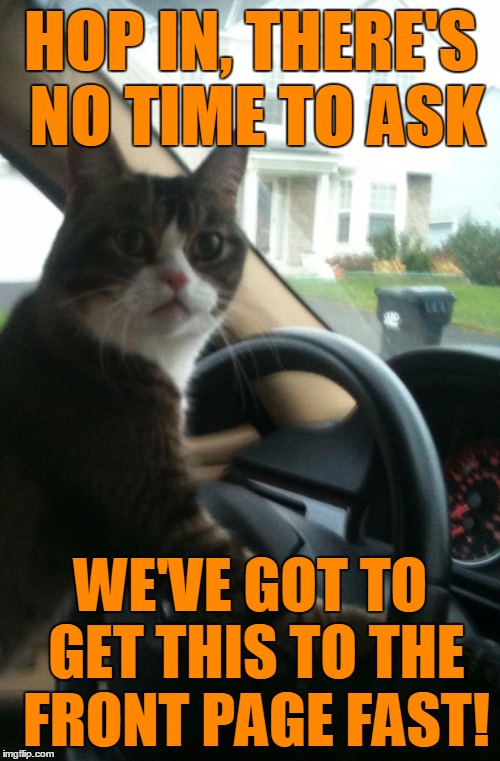 JoJo The Driving Cat | HOP IN, THERE'S NO TIME TO ASK WE'VE GOT TO GET THIS TO THE FRONT PAGE FAST! | image tagged in jojo the driving cat | made w/ Imgflip meme maker