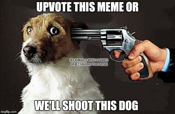 Desperate times call for desperate measures | NO ANIMALS WERE HARMED WHILE MAKING THIS MEME | image tagged in nsfw,dog | made w/ Imgflip meme maker