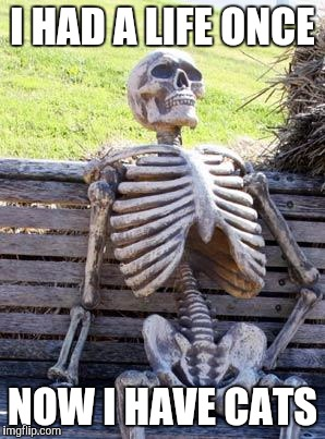 Waiting Skeleton Meme | I HAD A LIFE ONCE NOW I HAVE CATS | image tagged in memes,waiting skeleton | made w/ Imgflip meme maker