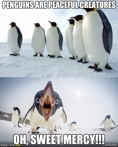 "When Penguins Attack: ""WHOA! Easy now! Good penguin! I'll just leave! AAAUUUGGGHHH!!!"" 
