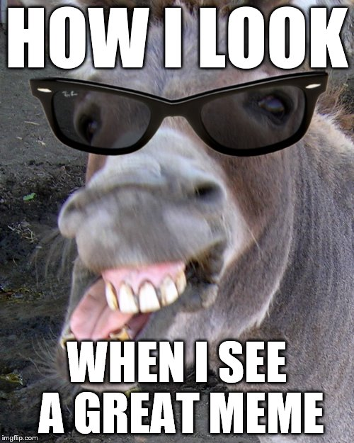 Deal with it Donkey  | HOW I LOOK WHEN I SEE A GREAT MEME | image tagged in deal with it donkey | made w/ Imgflip meme maker