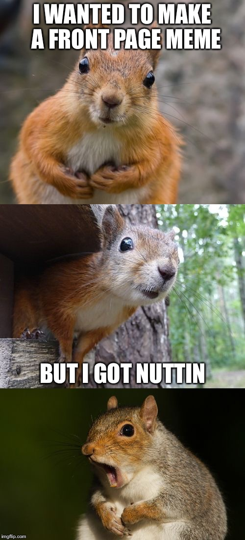 bad pun squirrel | I WANTED TO MAKE  A FRONT PAGE MEME BUT I GOT NUTTIN | image tagged in bad pun squirrel,memes | made w/ Imgflip meme maker
