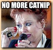 NO MORE CATNIP | made w/ Imgflip meme maker