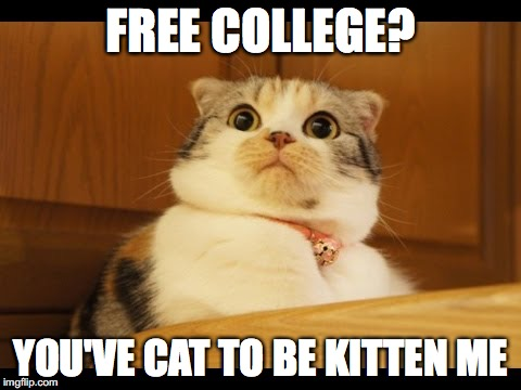 FREE COLLEGE? YOU'VE CAT TO BE KITTEN ME | image tagged in shocked cat | made w/ Imgflip meme maker