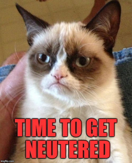 Grumpy Cat Meme | TIME TO GET NEUTERED | image tagged in memes,grumpy cat | made w/ Imgflip meme maker