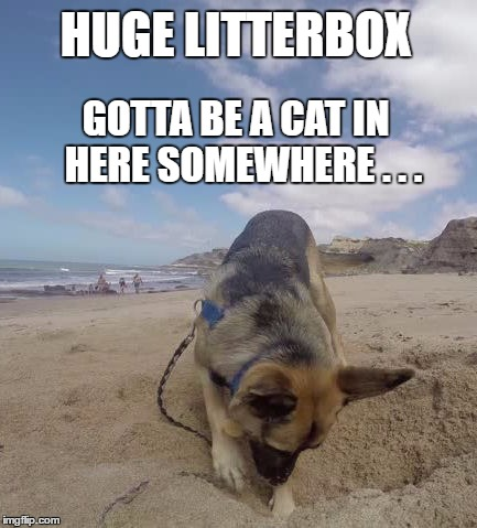 Huge Litterbox | HUGE LITTERBOX GOTTA BE A CAT IN  HERE SOMEWHERE . . . | image tagged in funny dogs | made w/ Imgflip meme maker