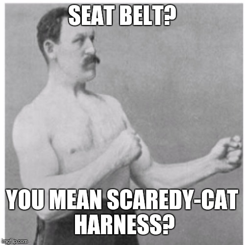 Overly Manly Man Meme | SEAT BELT? YOU MEAN SCAREDY-CAT HARNESS? | image tagged in memes,overly manly man | made w/ Imgflip meme maker