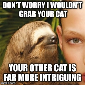 DON'T WORRY I WOULDN'T GRAB YOUR CAT YOUR OTHER CAT IS FAR MORE INTRIGUING | made w/ Imgflip meme maker