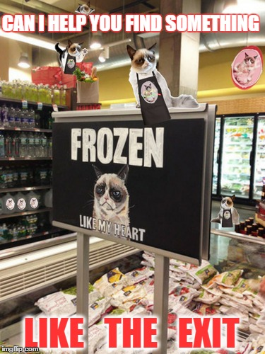 Grumpy cat invests his meme fortune in a chain of grocery stores. Jobs for the whole family,  |  CAN I HELP YOU FIND SOMETHING; LIKE   THE   EXIT | image tagged in grumpy cat everywhere,grocery store,frozen food,memes,funny cat memes | made w/ Imgflip meme maker