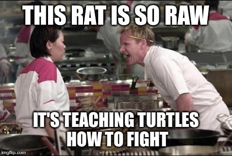 Angry Chef Gordon Ramsay Meme | THIS RAT IS SO RAW IT'S TEACHING TURTLES HOW TO FIGHT | image tagged in memes,angry chef gordon ramsay | made w/ Imgflip meme maker