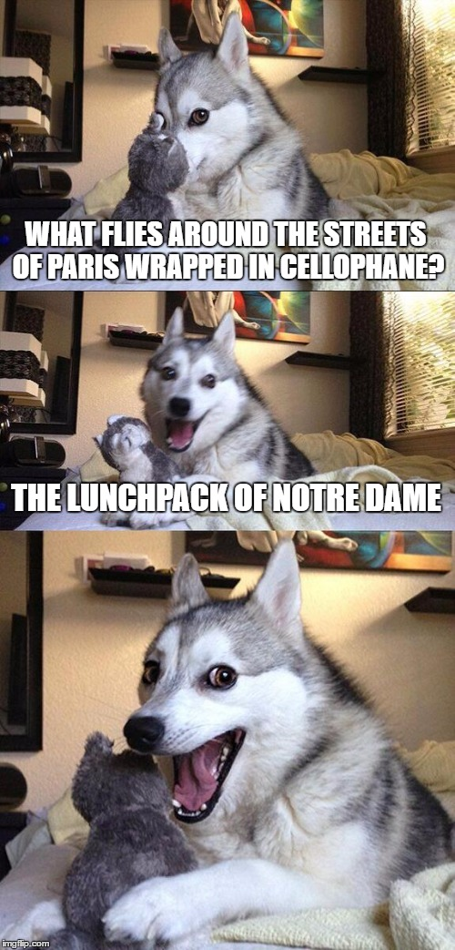Bad Pun Dog Meme | WHAT FLIES AROUND THE STREETS OF PARIS WRAPPED IN CELLOPHANE? THE LUNCHPACK OF NOTRE DAME | image tagged in memes,bad pun dog | made w/ Imgflip meme maker