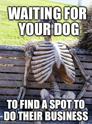 Waiting Skeleton | WAITING FOR YOUR DOG TO FIND A SPOT TO DO THEIR BUSINESS | image tagged in memes,waiting skeleton | made w/ Imgflip meme maker