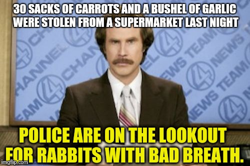 CRIME ALERT ! | 30 SACKS OF CARROTS AND A BUSHEL OF GARLIC WERE STOLEN FROM A SUPERMARKET LAST NIGHT POLICE ARE ON THE LOOKOUT FOR RABBITS WITH BAD BREATH. | image tagged in memes,ron burgundy | made w/ Imgflip meme maker
