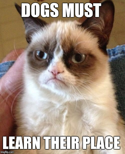 Grumpy Cat Meme | DOGS MUST LEARN THEIR PLACE | image tagged in memes,grumpy cat | made w/ Imgflip meme maker