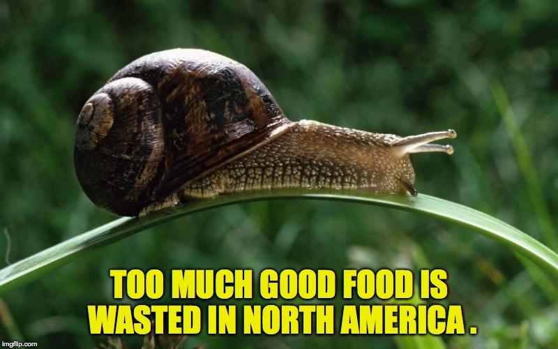 TOO MUCH GOOD FOOD IS WASTED IN NORTH AMERICA . | made w/ Imgflip meme maker
