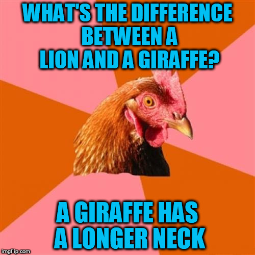 Anti Joke Chicken Meme | WHAT'S THE DIFFERENCE BETWEEN A LION AND A GIRAFFE? A GIRAFFE HAS A LONGER NECK | image tagged in memes,anti joke chicken | made w/ Imgflip meme maker
