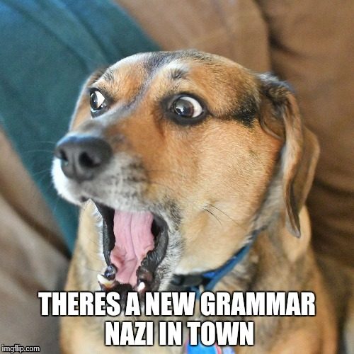 THERES A NEW GRAMMAR NAZI IN TOWN | image tagged in shocked dog | made w/ Imgflip meme maker