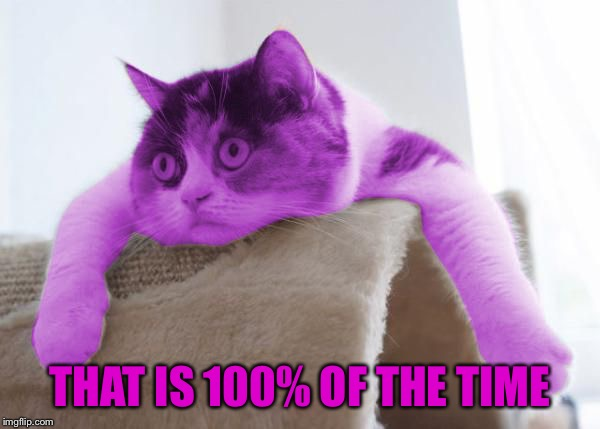 RayCat Stare | THAT IS 100% OF THE TIME | image tagged in raycat stare | made w/ Imgflip meme maker