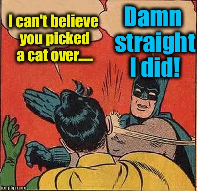 Batman Slapping Robin Meme | I can't believe you picked a cat over..... Damn straight I did! | image tagged in memes,batman slapping robin | made w/ Imgflip meme maker