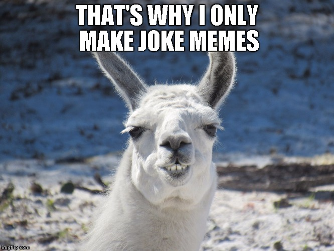 Derp | THAT'S WHY I ONLY MAKE JOKE MEMES | image tagged in derp | made w/ Imgflip meme maker
