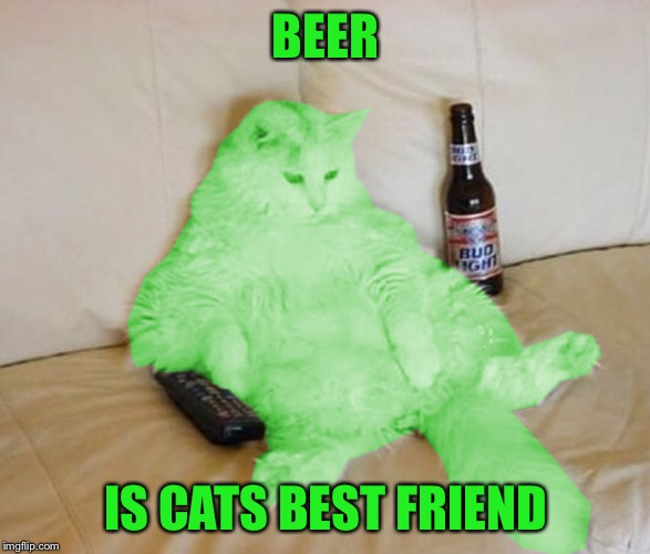 RayCat Chillin' | BEER IS CATS BEST FRIEND | image tagged in raycat chillin' | made w/ Imgflip meme maker