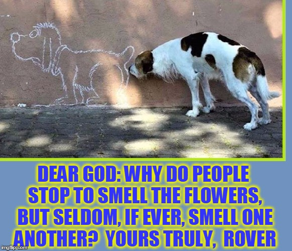 Rover asks God a Perplexing Question | DEAR GOD: WHY DO PEOPLE STOP TO SMELL THE FLOWERS, BUT SELDOM, IF EVER, SMELL ONE ANOTHER?  YOURS TRULY,  ROVER | image tagged in vince vance,dogs,funny dog memes,life imitates art,ha-ha fooled you,dogs' sense of smell | made w/ Imgflip meme maker